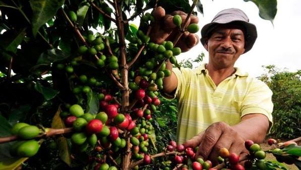 Colombia: la valle del triangolo del caffè